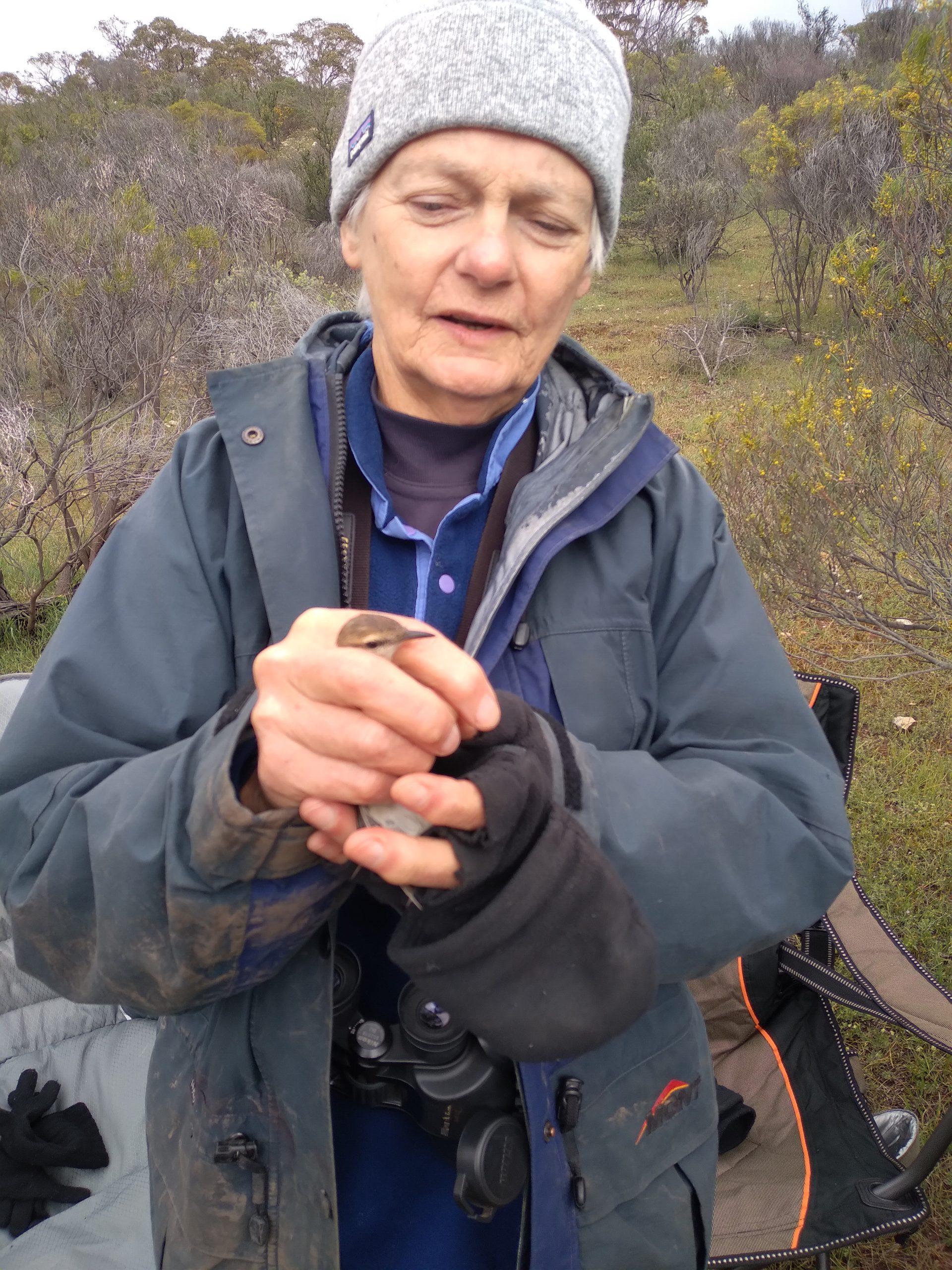 Releasing a Brown-headed Honeyeater